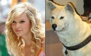 tswift dog